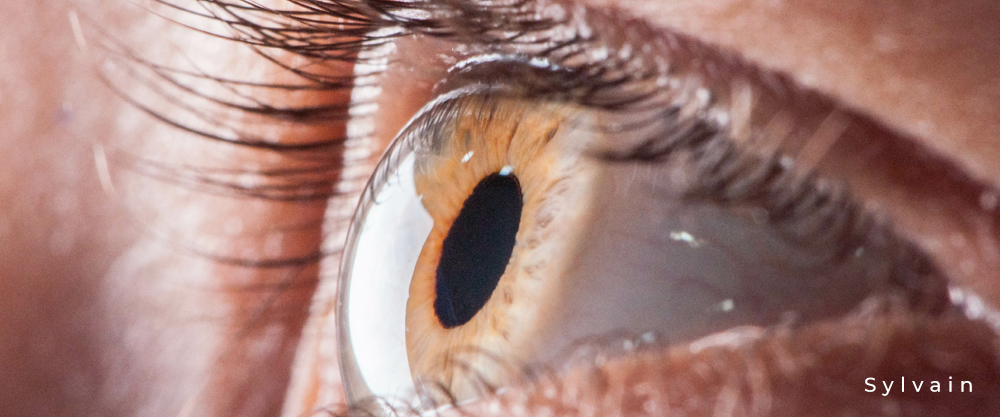 Auge mit gewölbter Hornhaut (Cornea), schwarzer Pupille, orange- brauner Iris und Wimpern